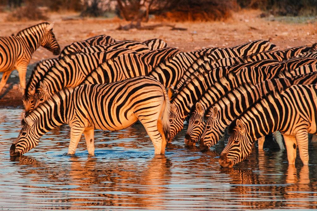 Zebra Nam